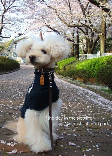 nigishi2.jpg